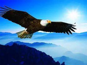 鹰的重生-改变是痛苦的,但是只有改变才能重生!